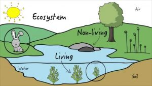 vocabulary environment-5